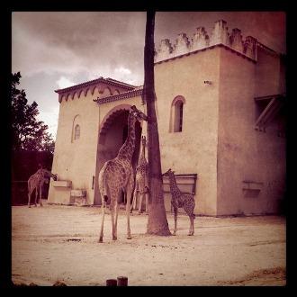 Portugal zoo giraffer2